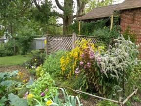 Garden native